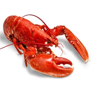 Lobster 1-10LB  Call for Price / Lb