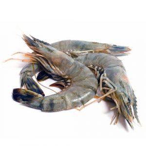 Shrimp size Jumbo U-10 Shell  / Lb
