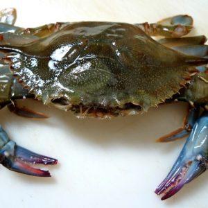 Jumbo Soft Shell Crab Box of 12