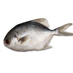 Whole Pompano Fish / Lb