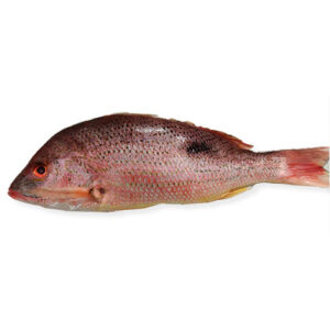 Whole Lane Snapper 2-4 lb